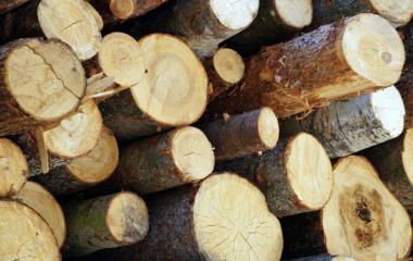 Opération gratuite : broyage de branches à domicile