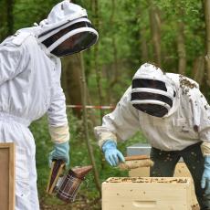 Mise en place des 6 ruches